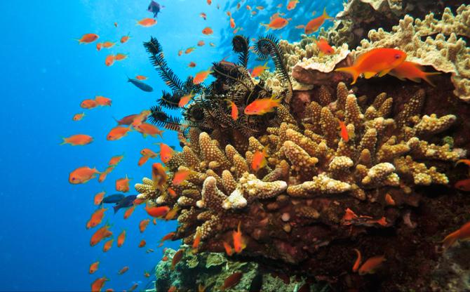 Biodiversity: Time for Radical Change