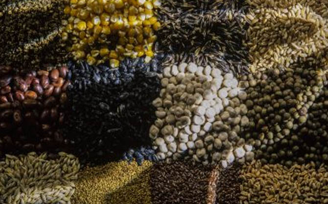 The Seed War: food biodiversity against corporations