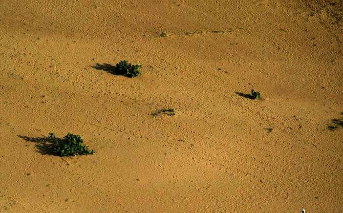 Au Tchad, une sécheresse dévastatrice