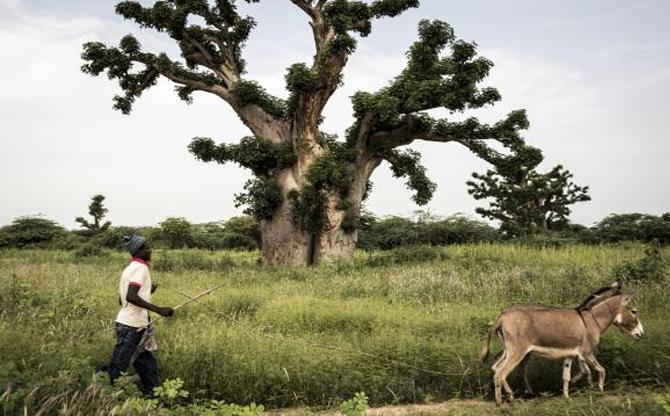 Sénégal : ciment contre environnement