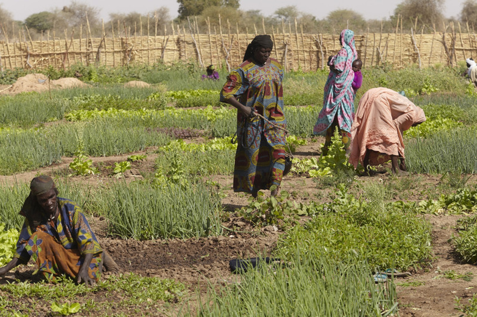 Solving The Water-land-people Equation In The Sahel