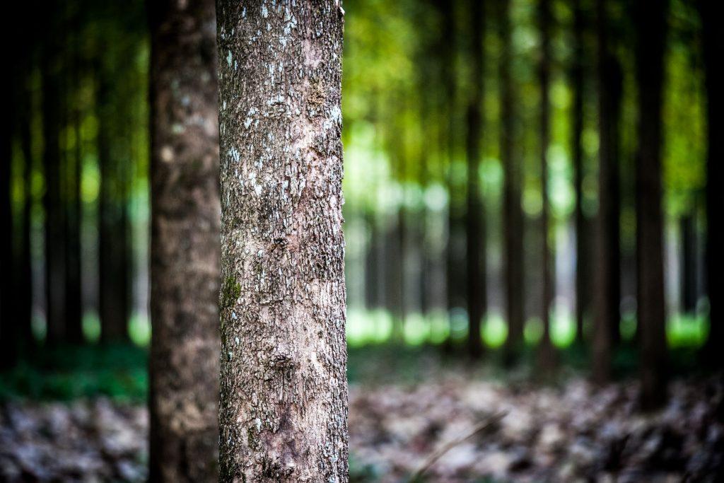 aller a «Solutions fondées sur la nature»: quand la biodiversité sauve le climat