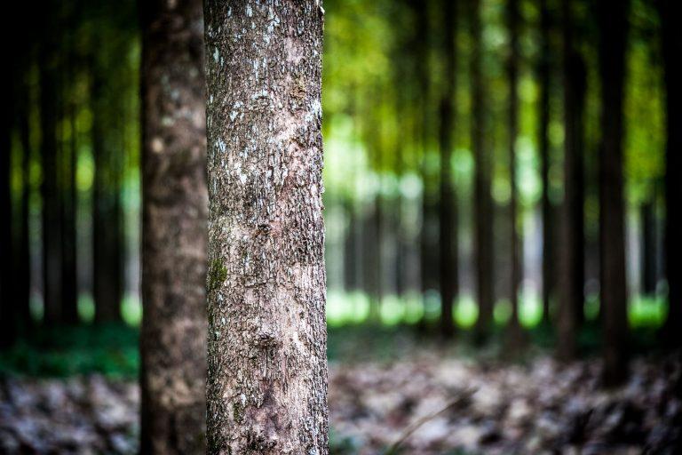 Plantations forestières au Mexique, qui contribueront à la réduction des émissions de gaz à effet de serre par séquestration du carbone. Photo © Alfredo Durante pour Proparco