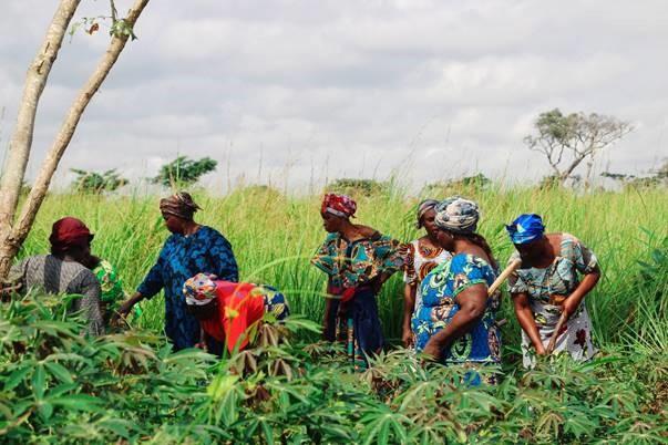 Femmes agricultrices d'Ignié, au Congo. Photo: © Victoire Dounamia