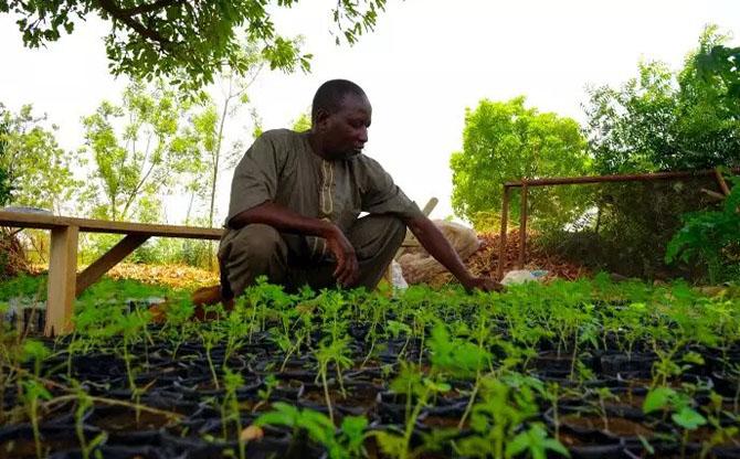 Au Burkina Faso, l'agroécologie se réinvente