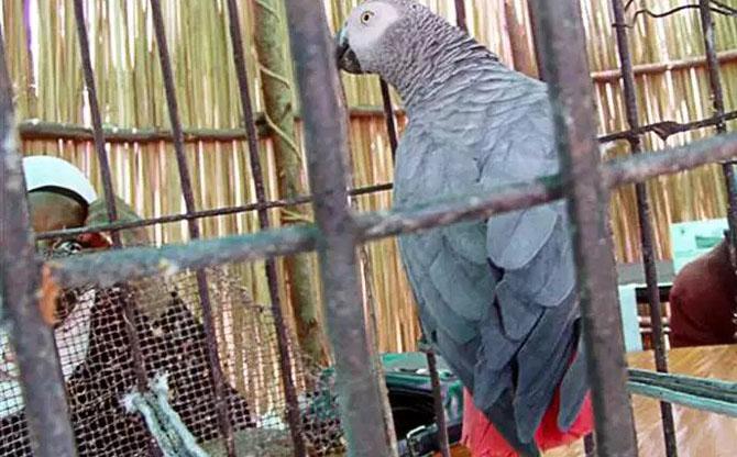 De la sauvegarde des perroquets au bien-être de la forêt