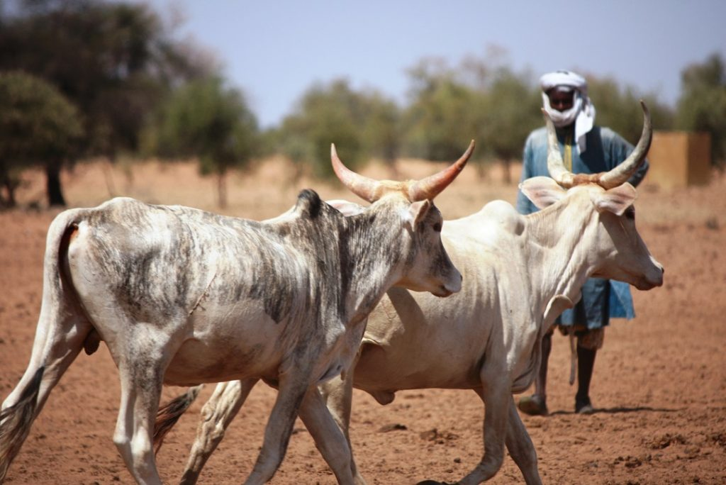 Pastoralism, a major economic pillar in the Sahel and a source of resilience for populations. Photo: CE / ECHO / Anouk Delafortrie Flickr Cc