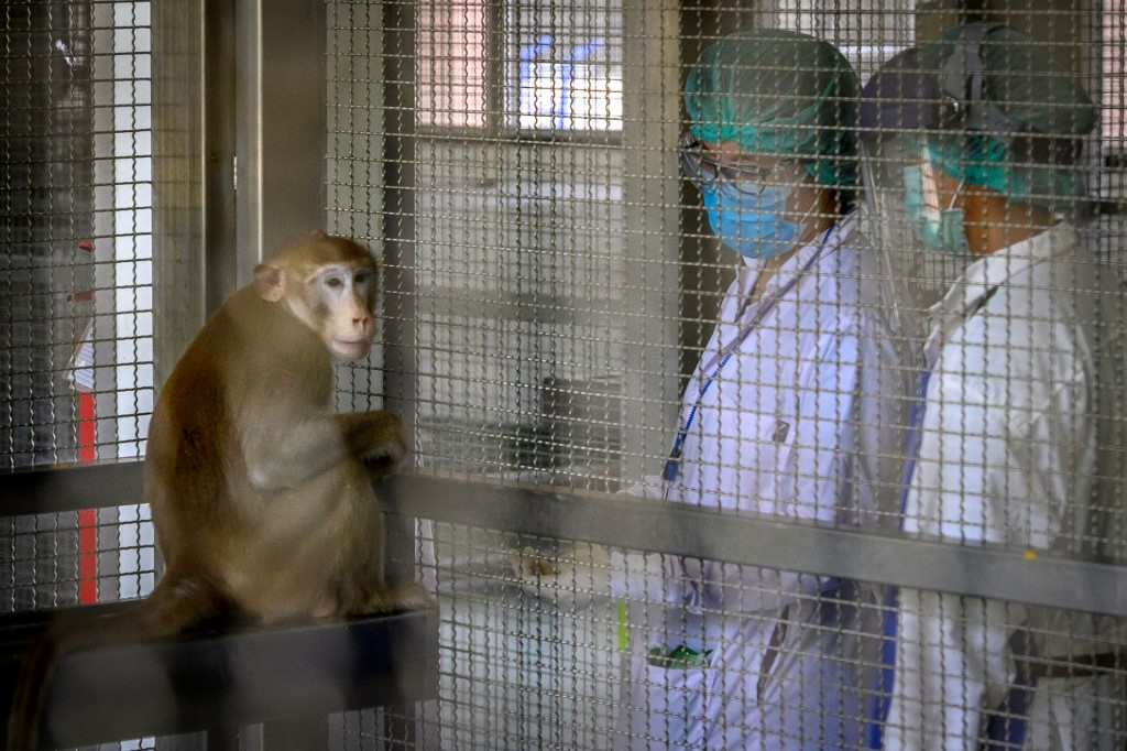 A laboratory monkey interacting with employees in the breeding centre for cynomolgus macaques at the National Primate Research Center of Thailand at Chulalongkorn University in Saraburi.(Photo by Mladen ANTONOV / AFP)