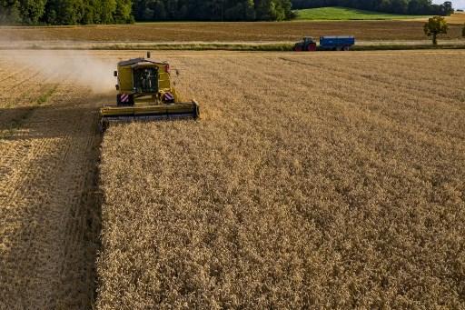 """Harvest in Boulange, in the Moselle department, July 25, 2020."" Photo Jean-Christophe VERHAEGEN / AFP"