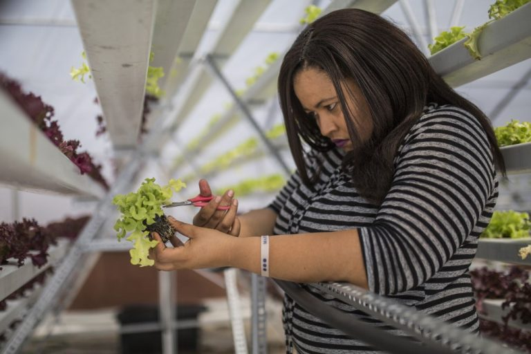 """""""In Season"""" rooftop farm in Johannesburg in 2018, where hydroponics technology is used to save up water. (Photo by Guillem Sartorio / AFP)"""