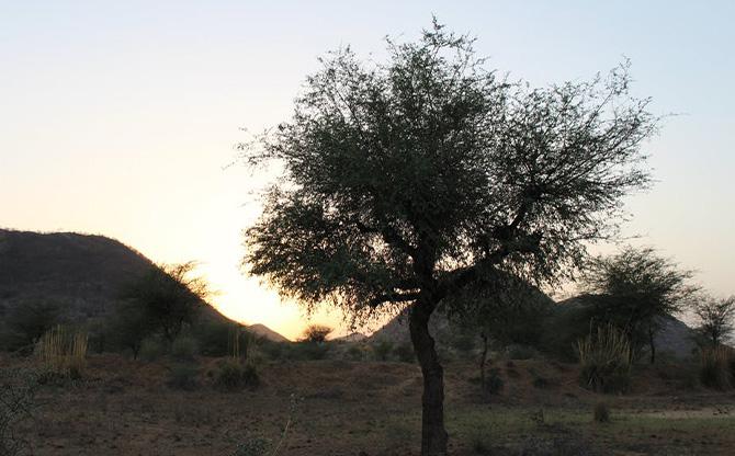 Environnement : un arbre en cache un autre