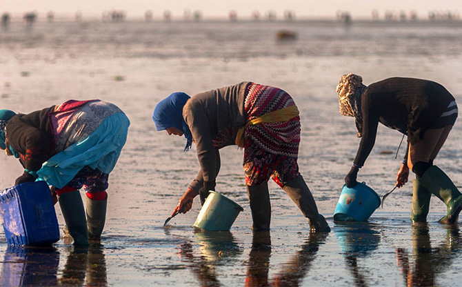 Sécurité alimentaire et aquaculture durable : un duo gagnant ?