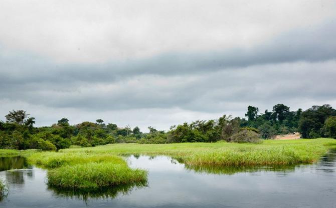 Au Congo, des tourbières qui inquiètent