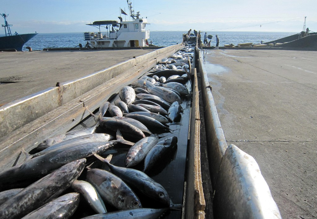 Des stocks de thons sont chargés à bord d'un cargo, dans le port de General Santos City (Philippines), le 2 décembre 2012, au moment où se tient à Manille un sommet sur la pêche durable dans la zone Asie-Pacifique. (photo Paul Bernaldez/AFP)